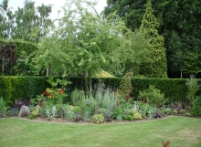 Herbaceous Borders & Feature Olive9