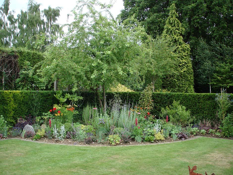 Herbaceous Borders & Feature Olive - jmorrisgardenservices